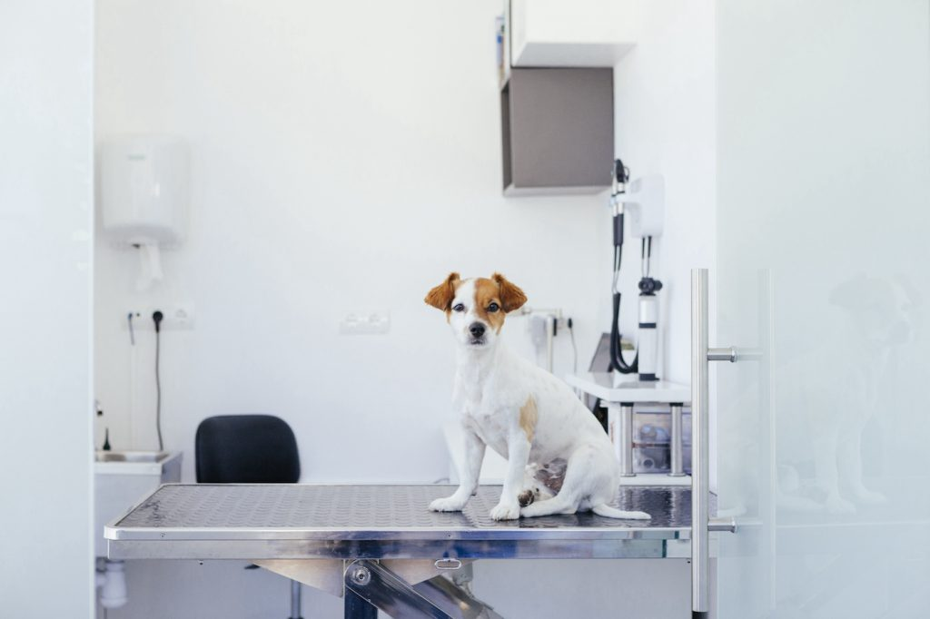 Puppy visiting a veterinary clinic